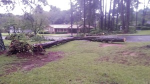 A scene on Wildwood Circle Tuesday morning. If you have photos of damage, please send to beth.alston@americustimesrecorder.com